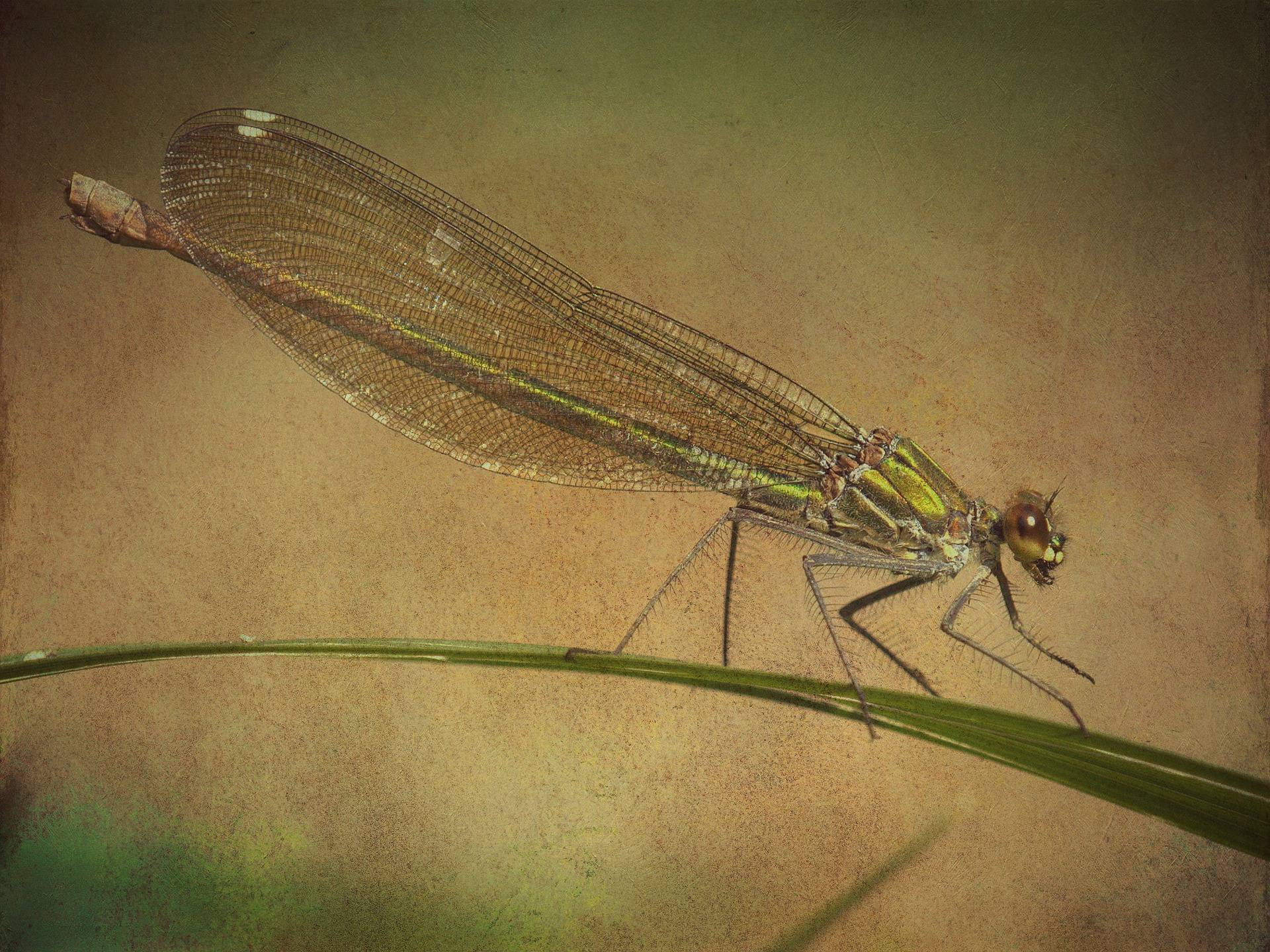 Krafttier Libelle – Symbolik und Bedeutung