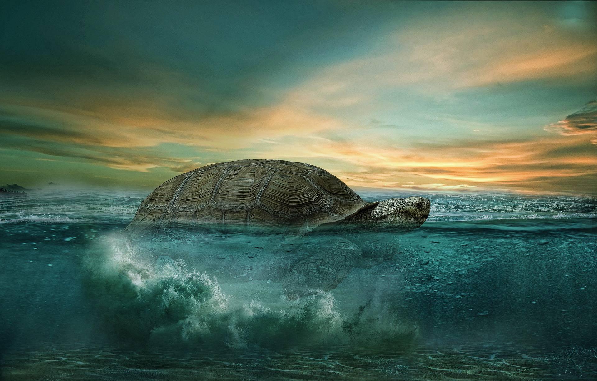 Krafttier Schildkröte – Symbolik und Bedeutung