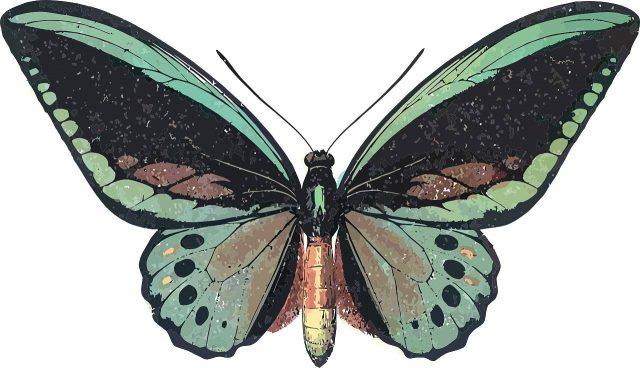 Bedeutet schmetterling was Krafttier Schmetterling: