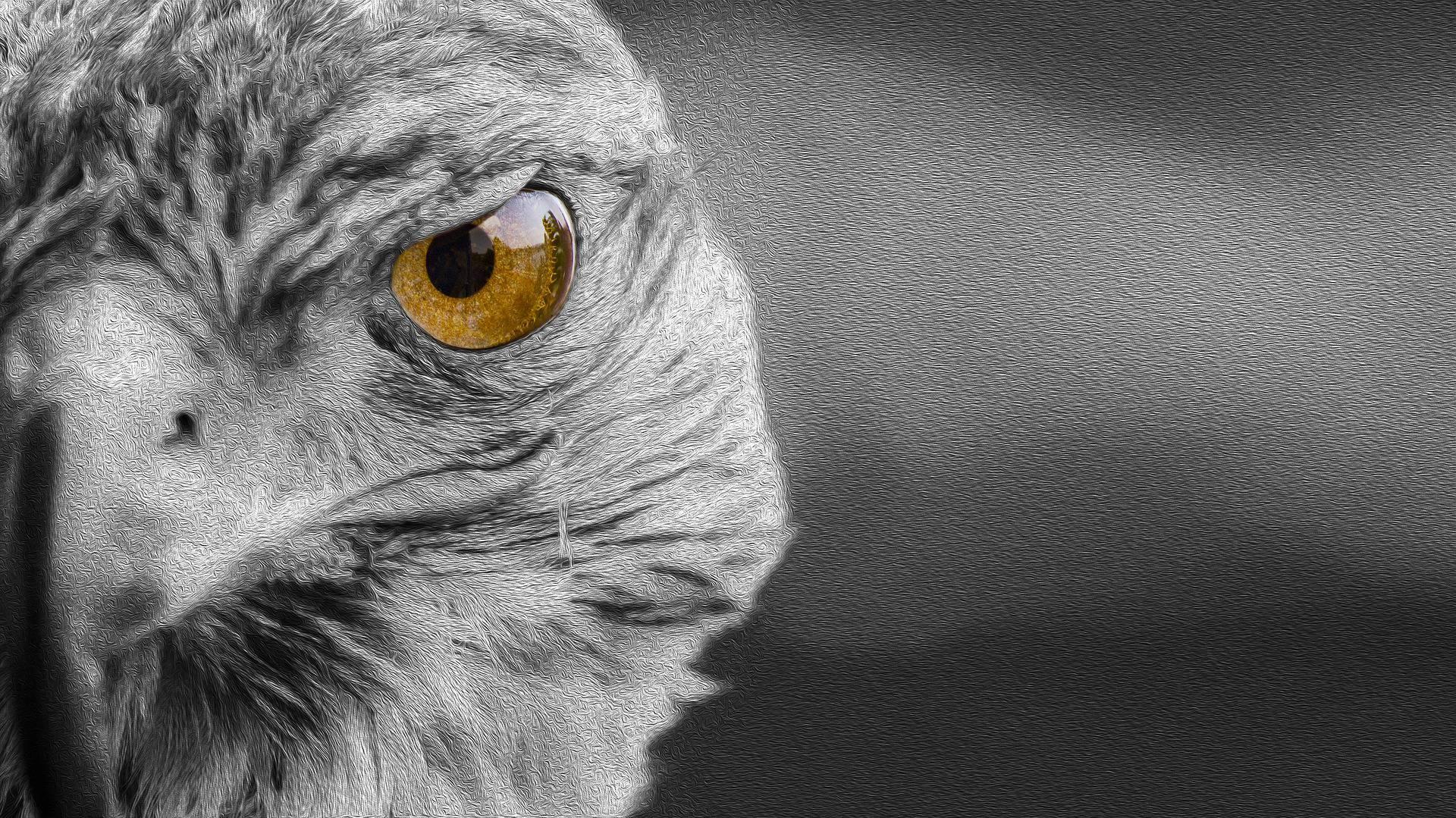 Krafttier Falke – Symbolik und Bedeutung