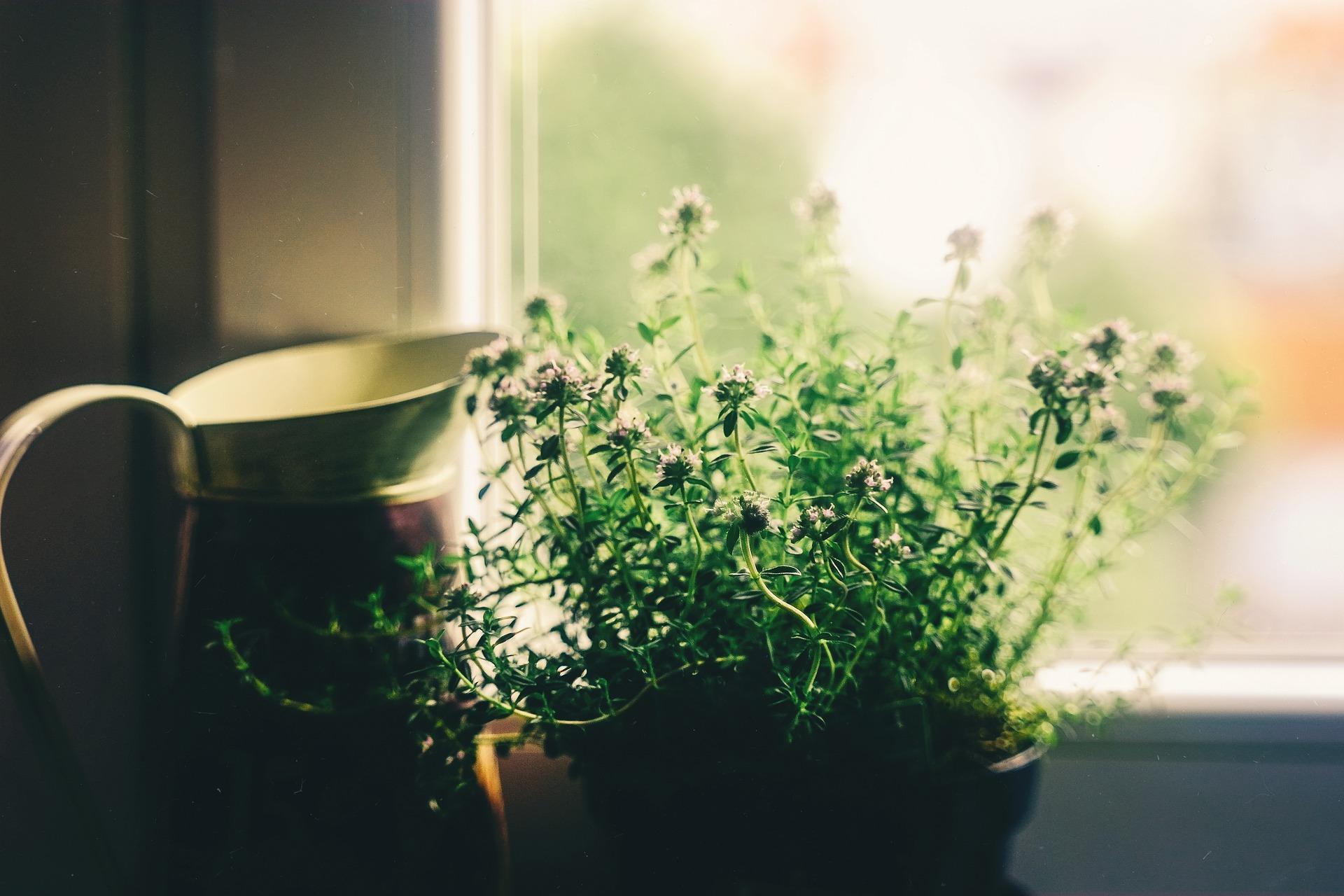 20 Pflanzen, die in deinem Haus positive Energie erzeugen