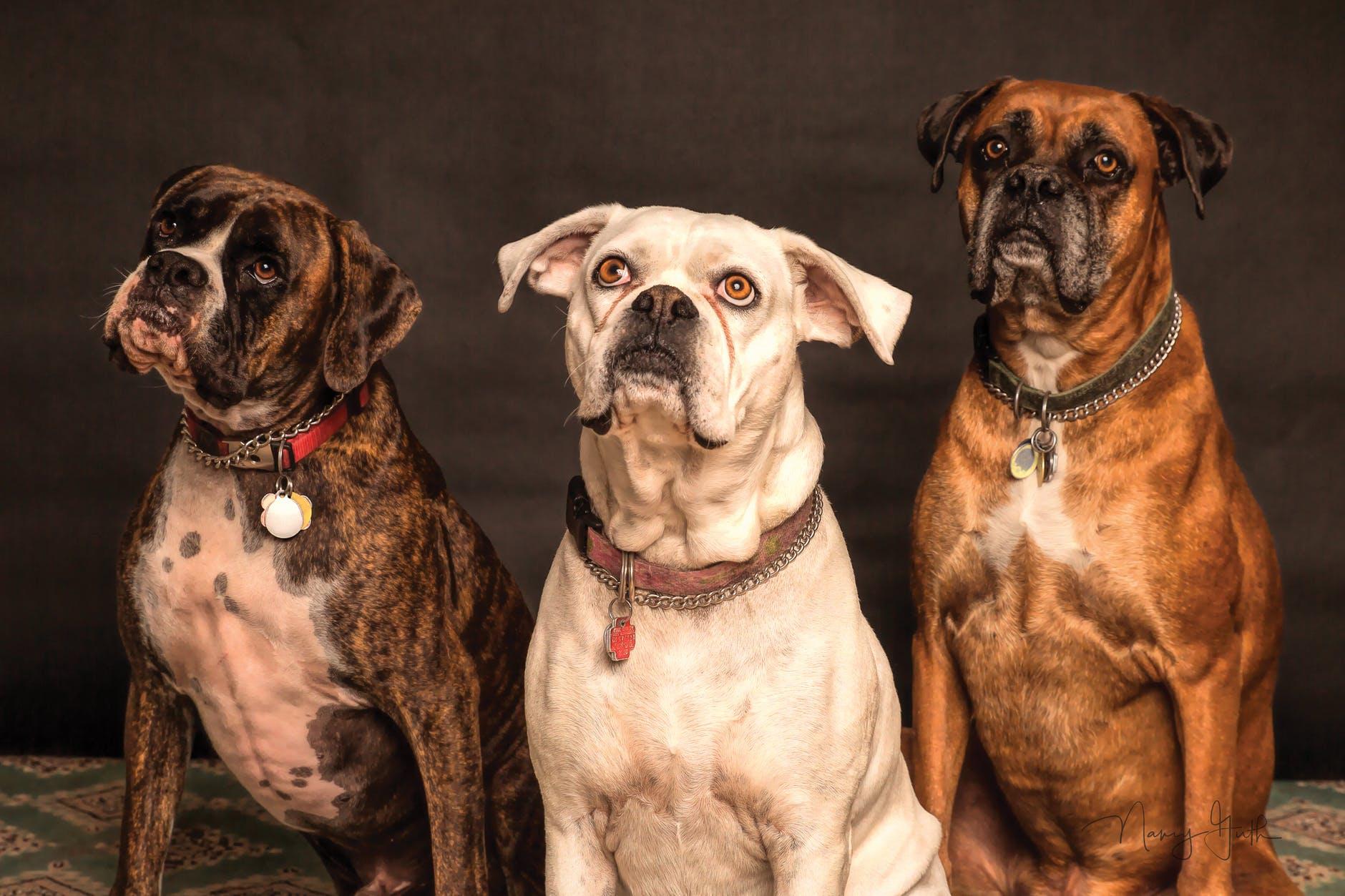 Die 12 Hunde des Zodiaks
