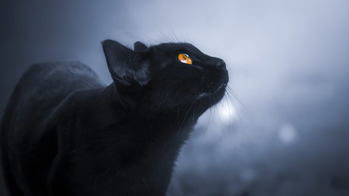 Können Katzen Geister sehen: Die ungesagte Wahrheit