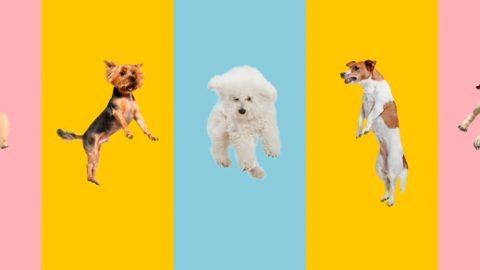 Welche Hunderasse würden Sie nach Ihrem Tierkreiszeichen sein?